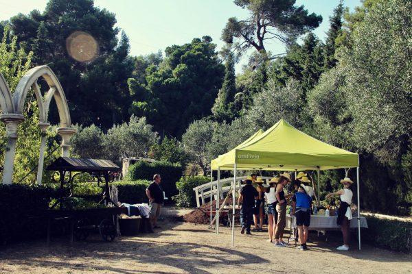Captain Lettuce_Amfivia_Team Events_Barcelona_Outdoor (17)