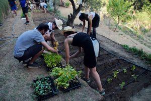 SOCIAL TEAM BUILDING IN BARCELONA: TIME TO PLANT AN ORGANIC GARDEN!