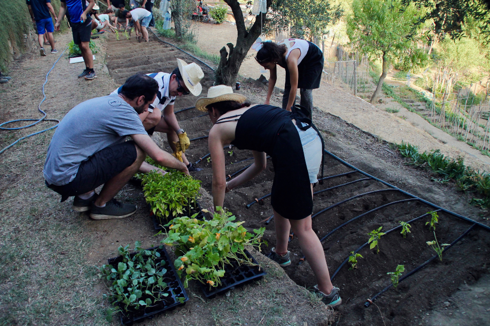 SOCIAL TEAM BUILDING IN BARCELONA: TIME TO PLANT AN ORGANIC GARDEN!